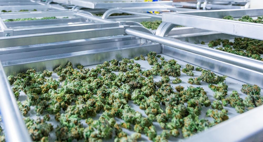 Guide to Dry Cannabis in 2020