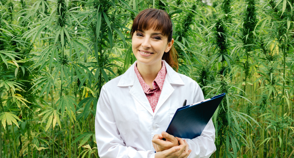 How to Get Job in Cannabis Industry