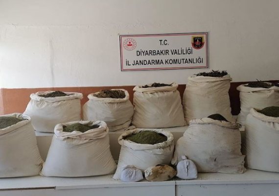 Approximately 2.5M cannabis Sativa roots seized in Turkey