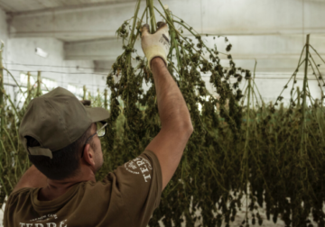 Chinese man got arrested for cultivating cannabis in his warehouse
